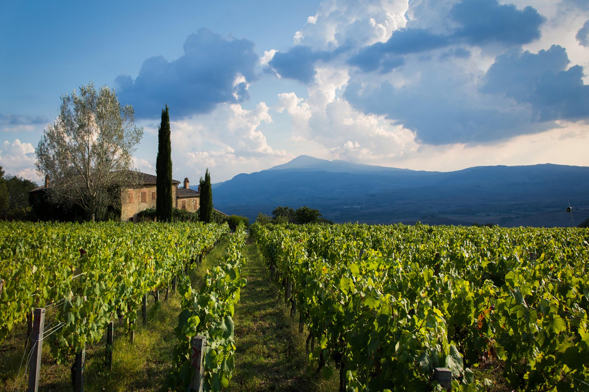 LUXURY VILLA WITH VINEYARDS FOR SALE MONTALCINO